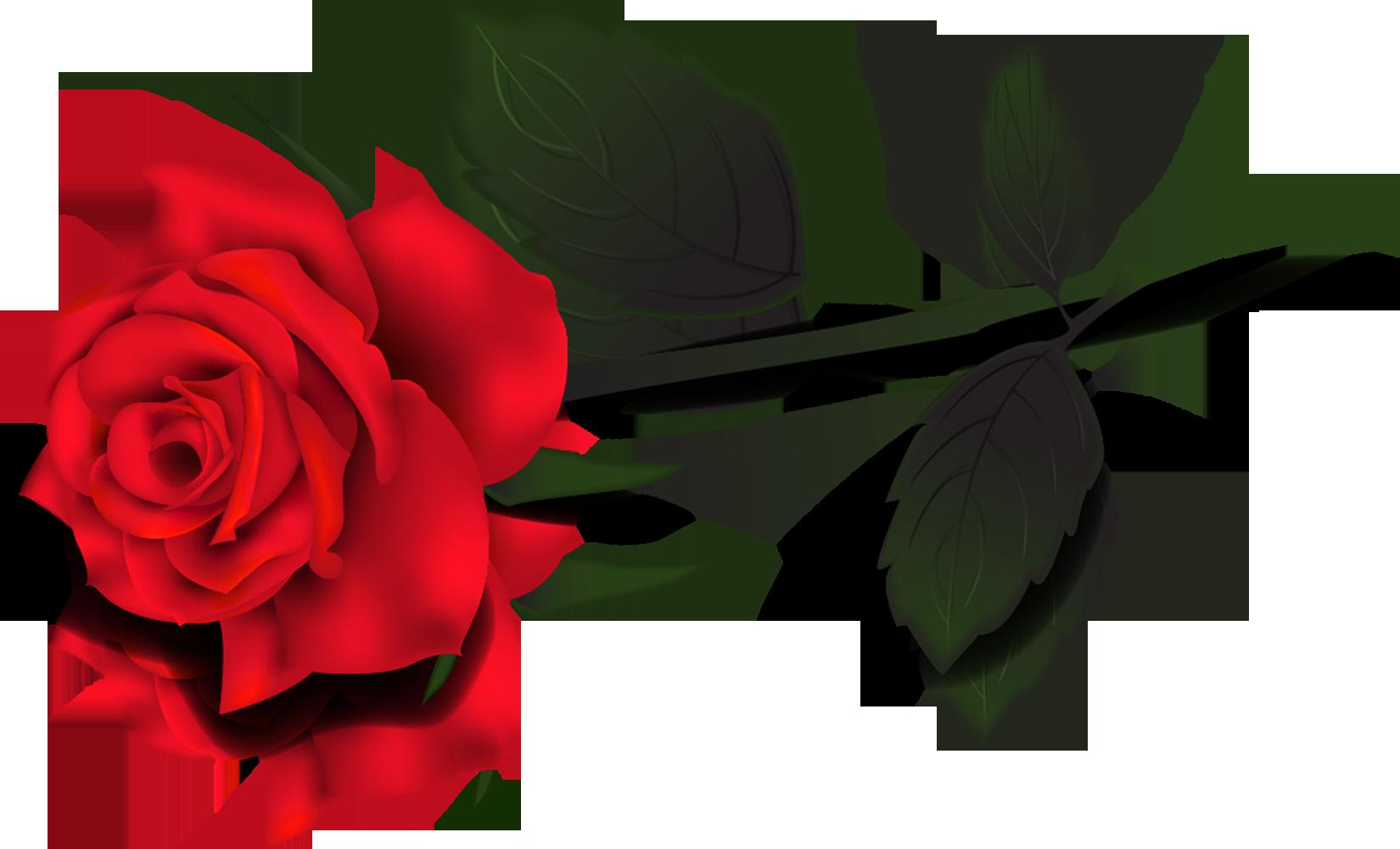 Война Алой и Белой Розы: предпосылки, ход событий, итоги.